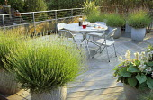 Roof terrace, lavender and hostas in dollytub containers