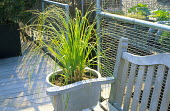 Cortaderia selloana in container by bench