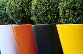 Row of colourful glazed containers with box balls
