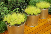 Grasses in galvanised metal containers