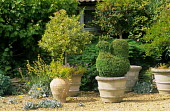 Box topiary bird and standard holly in containers
