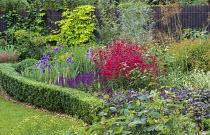 Penstemon 'Garnet', Salvia nemorosa 'Ostfriesland', Humulus lupulus 'Aureus', salix exigua, box edging, irises, Stipa gigantea
