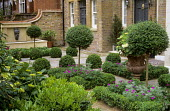 Topiary standards, box balls and edging, Geranium sanguineum, Ligustrum delavayanum standards