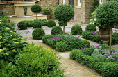 Topiary standards, box balls and edging