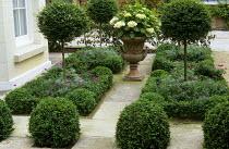 Formal front garden with Ligustrum delavayanum standards, terracotta urn with Hydrangea macrophylla 'Mme Emile Moulliere'