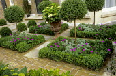 Topiary standards, box balls and edging, Ligustrum delavayanum standards