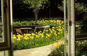 View from inside to lawn with naturalised Tulipa 'Candela' and Narcissus 'Geranium'