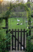 View through arch to geese in orchard