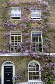 Wisteria sinensis on house