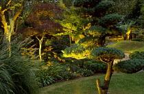 Cloud-pruned pine, acers, niwaki