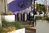 Table and chairs, grasses and lavender in large containers, painted purple wall