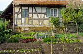Half-timbered house with small vegetable garden, Hundsbach, Alsace, France