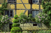 Topiary spiral, standard lilacs, half-timbered house, Grentzingen, Alsace