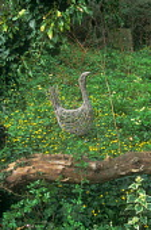 Twig goose ornament, log, celandines
