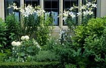 Lilium longiflorum 'Carmel' Mount Carmel