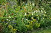 Mixed planting of cornflowers, delphiniums, Zinnia elegans, allium, cow parsley, nigella, dill, chives. Topiary hens of Lonicera nitida 'Baggesen's Gold'