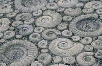 Cast ammonite mosaic paving, reconstituted stone
