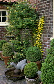 Box balls in containers, Lonicera periclymenum 'Graham Stuart Thomas' on frame, Hedera helix 'Buttercup', wire geese