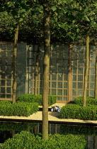Box topiary, trellis, galvanized  metal sheeting, London plane trees