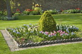 Hyacinth collection, clipped topiary, Victorian edging
