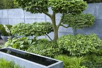 Zinc covered wall and zinc water trough designed by Domani, cloud-pruned hornbeam, Rodgersia podophylla, Hakonechloa macra, niwaki