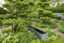 Cloud-pruned hornbeams, zinc water trough designed by Domani, niwaki