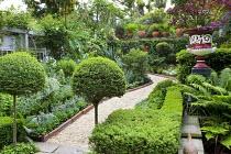 Green town garden, rope edging, clipped standard ligustrum balls
