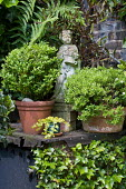 Green corner, ornament, Buxus sempervirens and hebe in terracotta pots