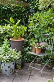 Terracotta containers on metal chair
