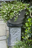 Container with Sutera cordata on ornamental pedestal