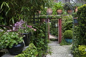Entrance to secret town garden, geraniums and pelargoniums in containers, archway