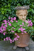 Classical head, container with pink Oxalis articulata, pot feet, bust