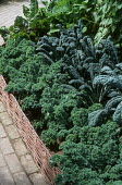 Wicker-edged garden with Kale 'Showbox' and Cabbage 'Black Tuscany'