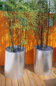 Orange painted wall with Phyllostachys nigra in metal containers on wooden decking