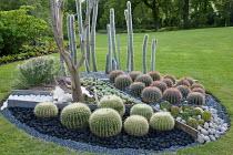 Circular cactus bed, pebble mulch