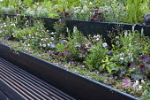 Tiered raised beds, roses, heuchera, geranium, gypsophilia, bench