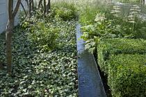 Clipped box, Rodgersia aesculifolia, Gillenia trifoliata, rill