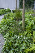 Woodland garden, bench, Cornus canadensis and Thalictrum kiusianum, concrete wall
