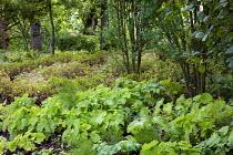 Woodland planting with swirls of perennials, heuchera