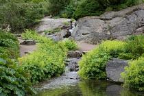 Waterfall in rock garden, Alchemilla mollis