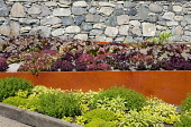 Raised vegetable bed in herb border, lettuces