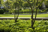 View through underplanted trees to circular pond