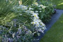 Mowing strip, lawn edging, leucanthemums