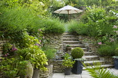Patio with containers, steps to terrace with parasol, lavender