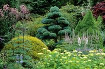 Border with cloud-pruned topiary shapes, niwaki