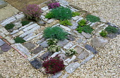 Aromatic plants in paving cracks, decorative surface with gravel