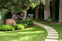 Stepping stone path through lawn, terracotta urn in border, agapanthus