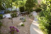 Gravel garden, bougainvillea, plumbago, wavy concrete path