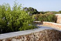 Dry-stone walls, plumbago, bougainvillea