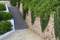 Trailing Rosmarinus officinalis 'Prostratus', syn Rosmarinus eriocalyx, Rosmarinus lavandulaceus on dry-stone wall, stairs with ceramic tiles